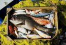 Εντατικοί Αλιευτικοί έλεγχοι στην Εύβοια – 3 παραβάσεις σε ένα 24ωρο
