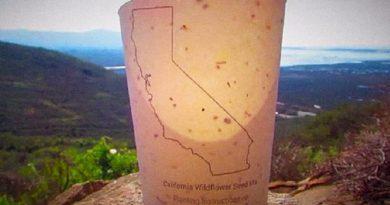Βιοδιασπώμενα ποτήρια καφέ που περιέχουν σπόρους, μετατρέπονται σε δέντρα