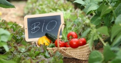 Bιολογικές καλλιέργειες: Επιδοτήσεις 400 εκατ. ευρώ – Ποιοι είναι οι δικαιούχοι