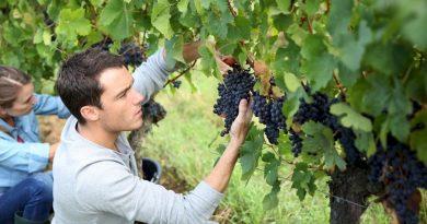 Τα φορολογικά οφέλη για τους νέους αγρότες