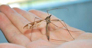 Γεια σας … είμαι η Tipula