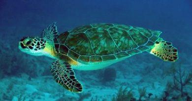 Παγκόσμια Ημέρα Θαλάσσιας Χελώνας