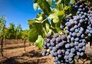 9 εκατ. ευρώ για το Πρόγραμμα Απόσταξης οίνου για το 2021