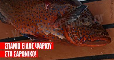 Σπάνιο είδος ψαριού πιάστηκε στο Σαρωνικό – συναντάται στον Ειρηνικό Ωκεανό